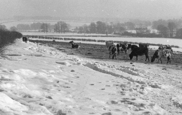 Homington hiver 1963