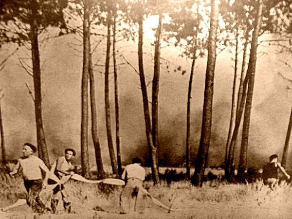 lutte contre les incendies dans les Landes en aout 1949