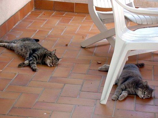 chats au repos pendant la canicule aout 2003