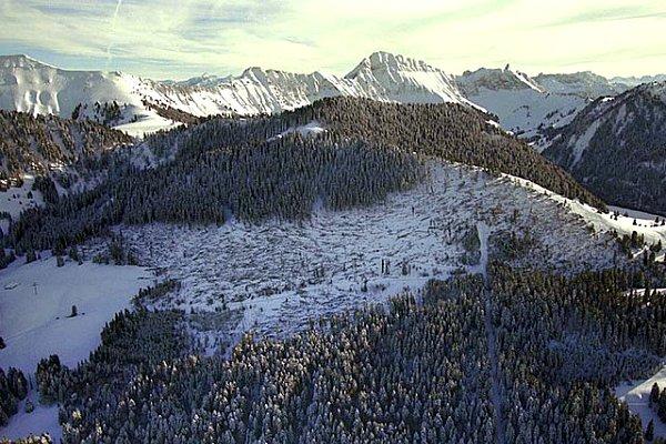 foret couche dans les alpes