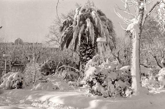 jardins enneiges de Figueres en fevrier 1956