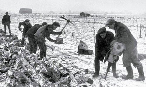labours en Angleterre en fevrier mars 1947