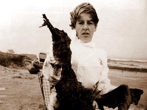 oiseau victime du fioul 1999