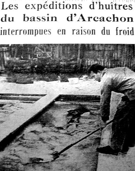 désarroi des ostréiculteurs fin décembre 62