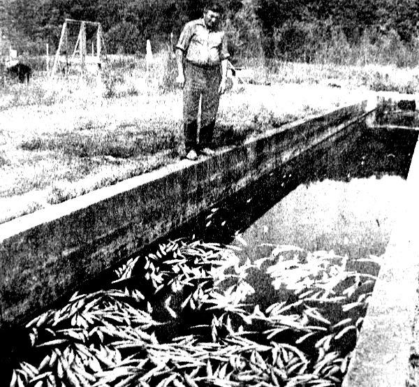 les degats dans la pisciculture juillet 1976