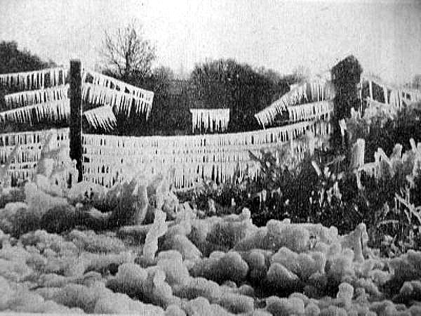 des cultures recouvertes de glace janvier 63