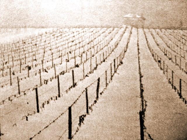 vignoble Haut Brion 1956